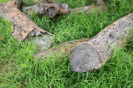 old log timber rotten wood laying down on grass ground Stock Photo