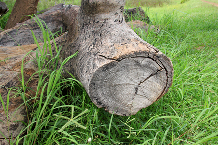 decompose: old log timber rotten wood laying down on grass ground Stock Photo