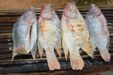 freshwater: grilled freshwater tilapia fishes