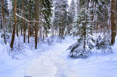 winter wood: Winter wood to Abramtzevo, Moscow Region, January, 2013