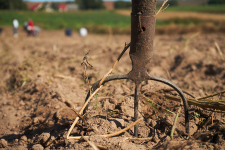 Old rustic pitchfork on a field. Close up harvest time, family farmers seasonal job concept 版權商用圖片
