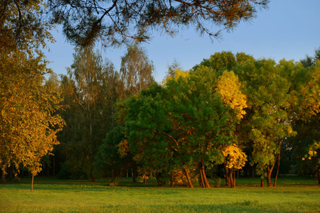 Autumn begins leaves changing color in first days of fall season change concept. End of summer days, early autumn
