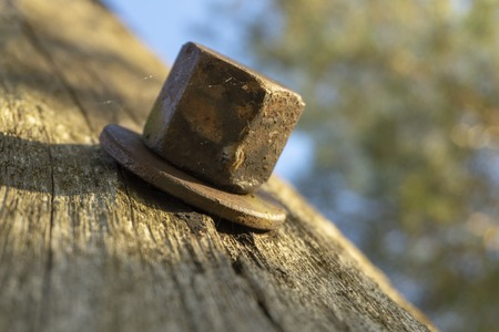 Old rustic bolt head with washer attached, stuck inside unpainted wooden surface. Viewed in close-up from low angle, with tree tops blurred in background. Outdoor object macro shot