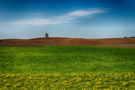 Agricultural landscape with a lone tree in the red earth of a ploughed field in spring under a hazy blue sunny sky
