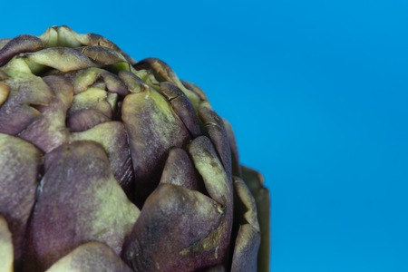 Close up of purple artichoke on blue background. Asteraceae or Compositae family of flowering plant Standard-Bild