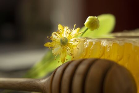 Block of comb honey with flower and wooden utensil for dispensing the honey in a low angle close up view in shadows