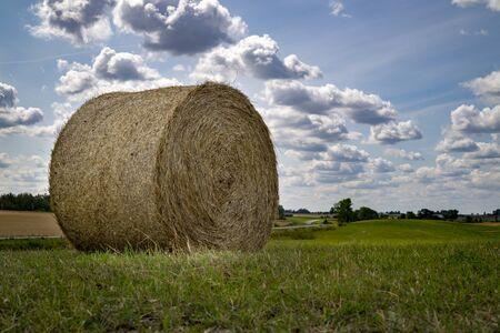 Freshly harvested circular hay bale in a field or pasture in summer in a low angle view under a cloudy blue sky in an agricultural landscape