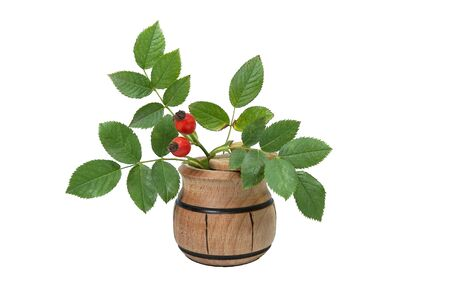 Bright red rose hips with green leaves on small wooden pot isolated on white with copy space rich in Vitamin C and used for medicinal treatment