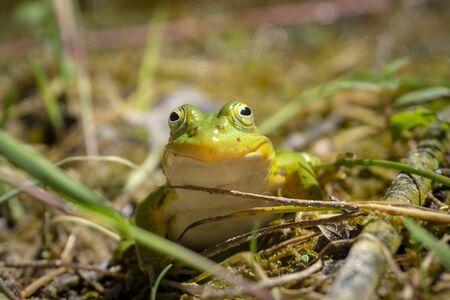 Light green frog that appears to be posing for the camera and smiling