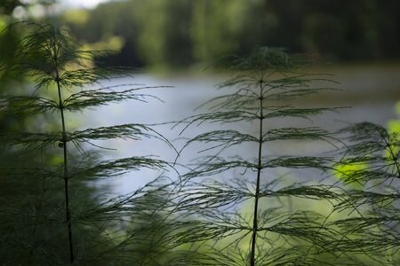 Fine green vegetation growing on a bank overlooking water in a close up selective focus view in summer