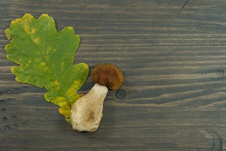 Autumn or fall still life with fresh seasonal mushrooms harvested from woodland, colorful leaves and bark off a tree with copy space