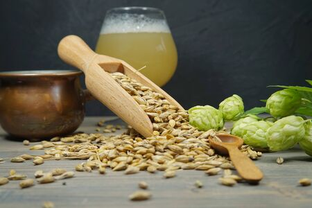 Branch of fresh hops on the plant and barley seeds spilling from wooden scoop behind frothy beer or ale in a tall stemmed goblet in a concept