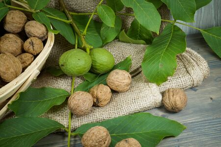 Fresh healthy walnuts in shells and green husks on a table with a rustic woven basket in a low angle view Stock Photo