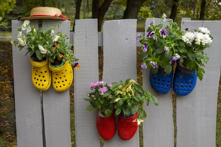 Vivid colorful pairs of rubber shoes, nailed to wooden fence and used as a flower pots with plants growing in them. Garden decoration concept Stock Photo