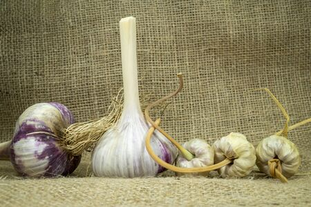 Garlic harvest, bulbs and bulbils on a hessian fabric in a close up view Imagens - 132079438