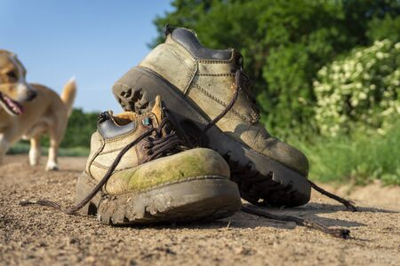 Pair of old trekking shoes on the road, viewed from low angle in close-up with a small dog blurred in the background