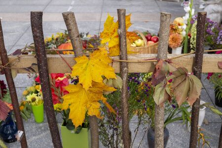 Brightly colored Autumn display on a rustic wooden fence with colorful yellow and red fall leaves, berries and sprays of flowers in a concept of the seasons