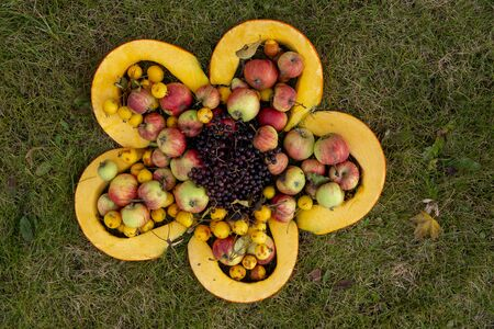 Fresh black berries, apples and slices of yellow pumpkin forming big flower shape on the ground. Viewed from above with copy space. Harvest festival art object Stockfoto
