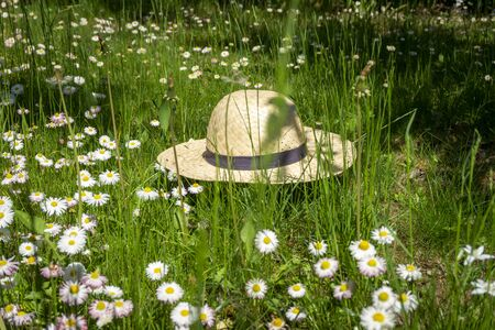 Straw hat lying in a spring meadow with scattered fresh white daisies amongst the green grass conceptual of the seasons Stockfoto