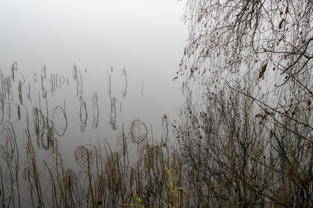 Moody misty autumn background with wild grass on the shoreline reflected in a tranquil lake with copy space conceptual of the seasons Stockfoto