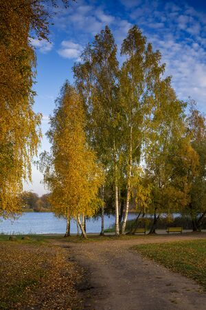 Colorful tall yellow autumn trees with benches on a lake shore with a winding dirt track and fallen leaves on the ground conceptual of the seasons Stockfoto