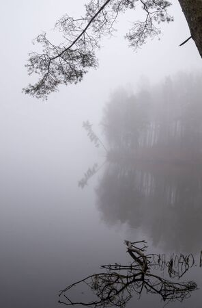 Reflections on a tranquil lake with autumn mist viewed past the branches of a tree in a serene atmospheric landscape