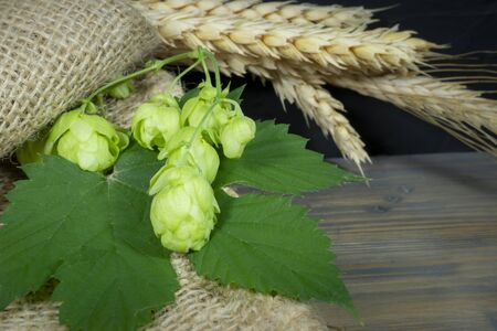 Still life with fresh green hops and leaves on hessian lying on a rustic wooden table