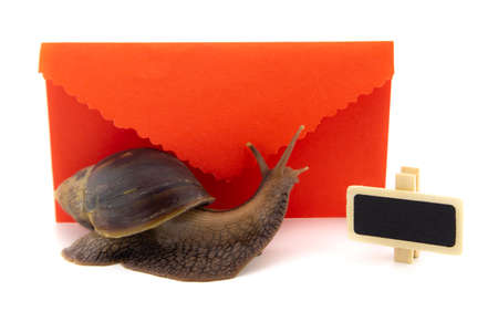 Terrestrial snail in front of a colorful red romantic envelope with frilled edges alongside a small slate or signboard with copy space in a Valentines day concept
