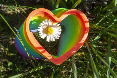 Single spring daisy through a vibrant rainbow colored toy spring in the shape of a heart framing the flower in a receding perspective conceptual of spring