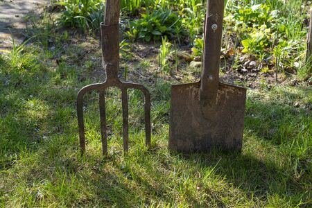 Garden forks and spade or shovel on a green lawn in a concept of spring gardening