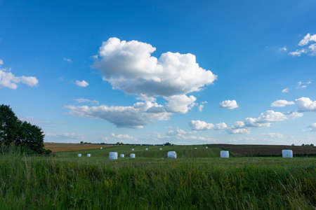 Plastic covered circular hay bales in a farm field or pasture in spring under a sunny blue sky with fluffy white clouds in an agricultural landscape 版權商用圖片