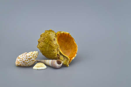 Various seashells in gray background with free space for text