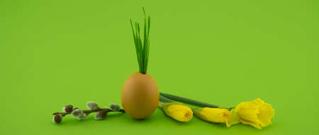 Creative Easter holiday or spring banner with wheat seedlings growing from eggshells, yellow flowers and willow branch over a green background with free copy space for text