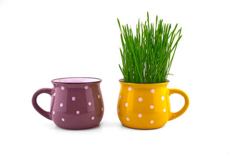 Wheat seedlings growing from yellow cup isolated on white background 스톡 콘텐츠