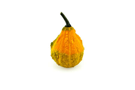 One whole yellow decorative gourd isolated on white background