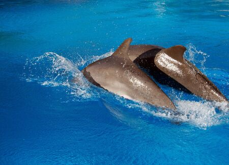Two dolphins photo