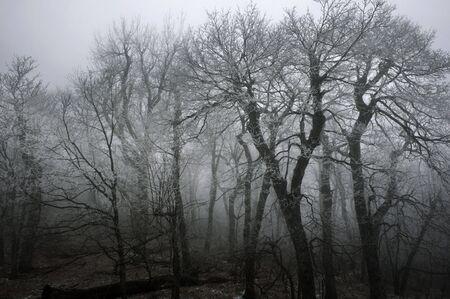 朝は神秘的な森林