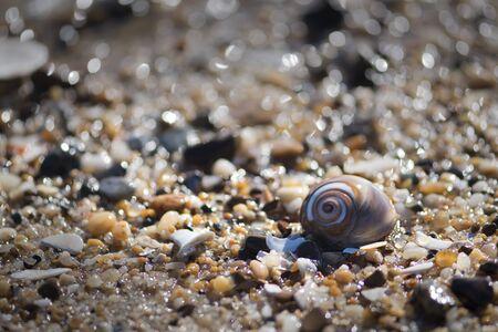 dewey: Shell Stock Photo