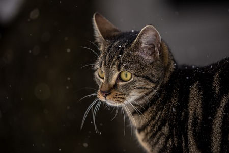 cute cat in winter snow
