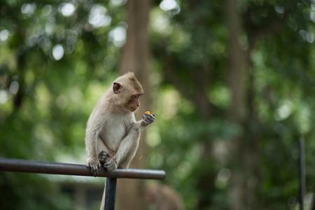sciureus: monkey eating something