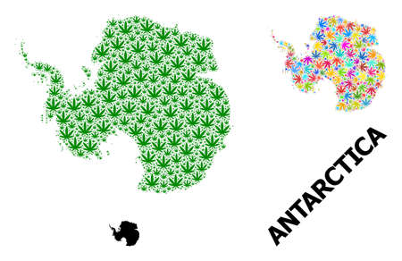 Vector cannabis mosaic and solid map of Antarctica. Map of Antarctica vector mosaic for cannabis legalize campaign. Map of Antarctica is formed from green and psychedelic cannabis leaves.