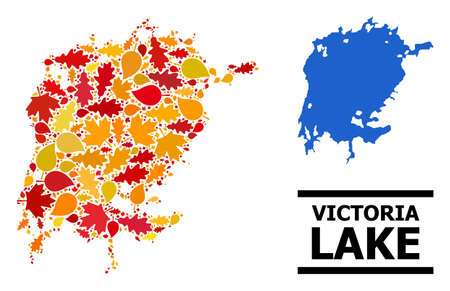 Mosaic autumn leaves and usual map of Victoria Lake. Vector map of Victoria Lake is done from scattered autumn maple and oak leaves. Abstract geographic scheme in bright gold, red,