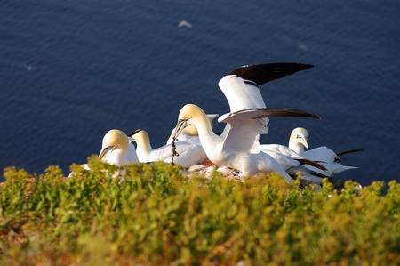 helgoland: Helgoland - German island in the North sea