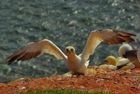 Helgoland - german island photo