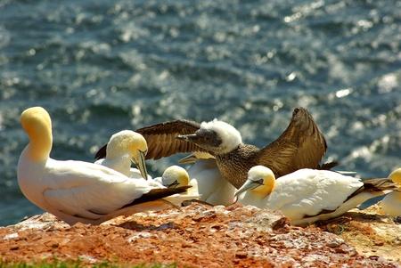 helgoland: Helgoland - german island