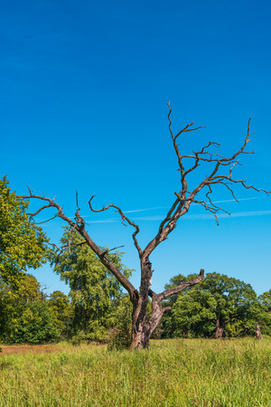 Lonely tree and like savanna landscape, gorgeous nature in Germany, 2014 photo