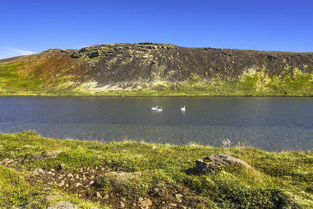 Icelandic whooper swan family at lake in evening, Iceland, summer, 2016 Stock Photo