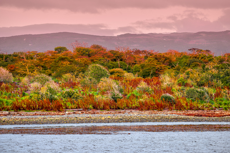 Gorgeous landscape of Patagonias Tierra del Fuego National Park in Autumn, 2017 Фото со стока