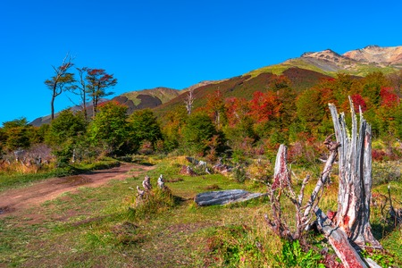 Gorgeous landscape of Patagonias Tierra del Fuego National Park in Autumn, Argentina