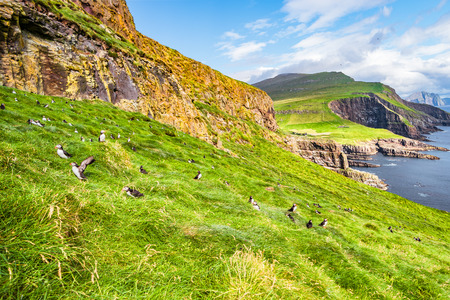 Panoramic view of Mykines at Faroe islands and North Atlantic puffins late summer time, sunny day
